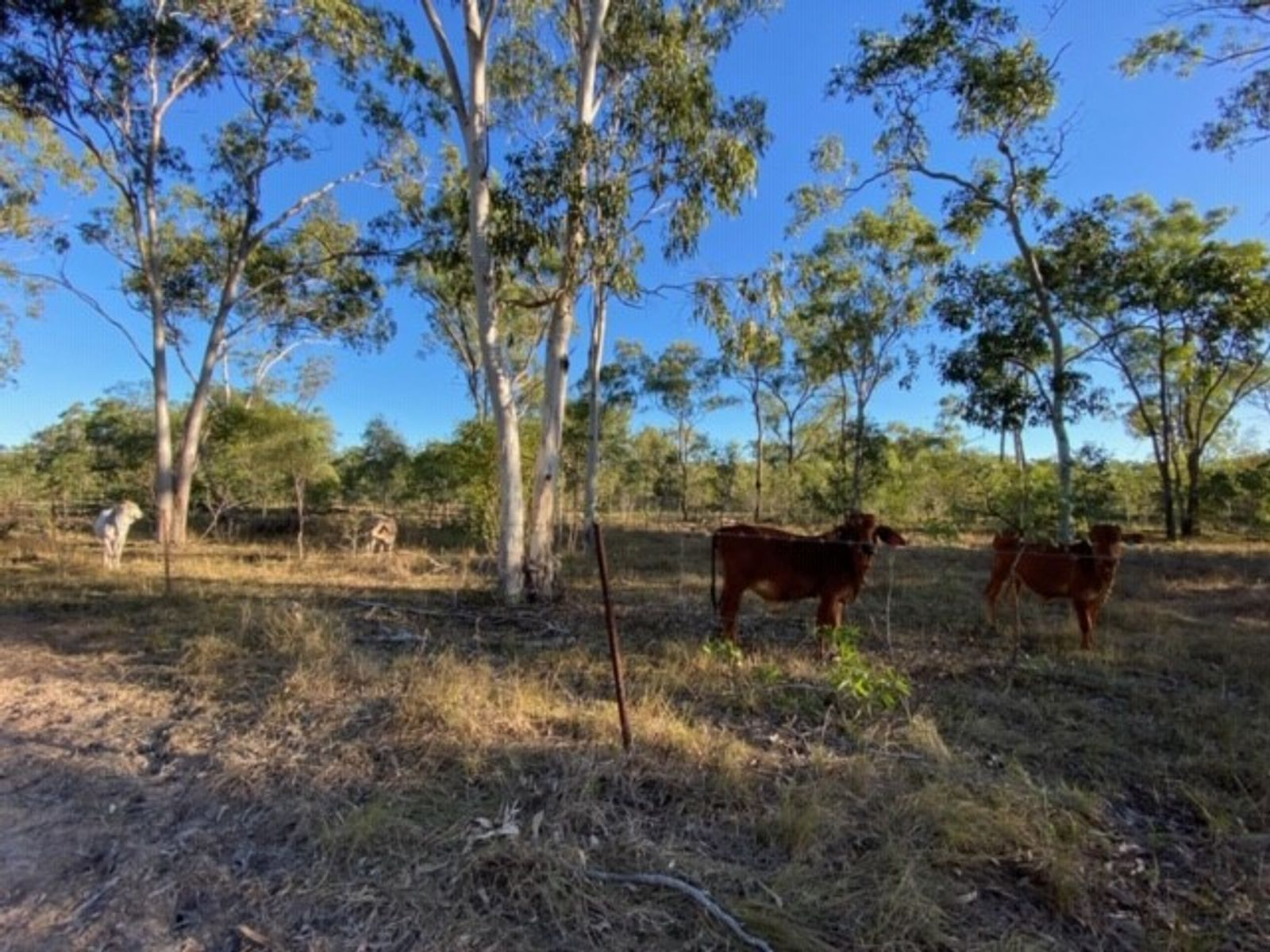 524 St Lawrence Connection Road, St Lawrence, QLD 4707