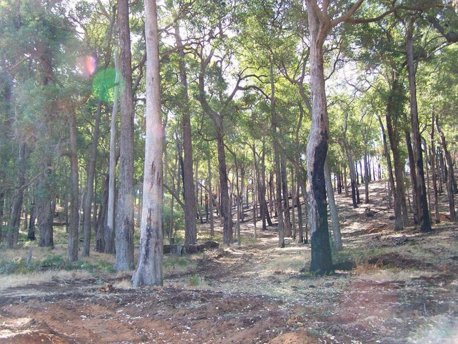 Lot 12 Woodland Rise, Yabberup, WA 6239
