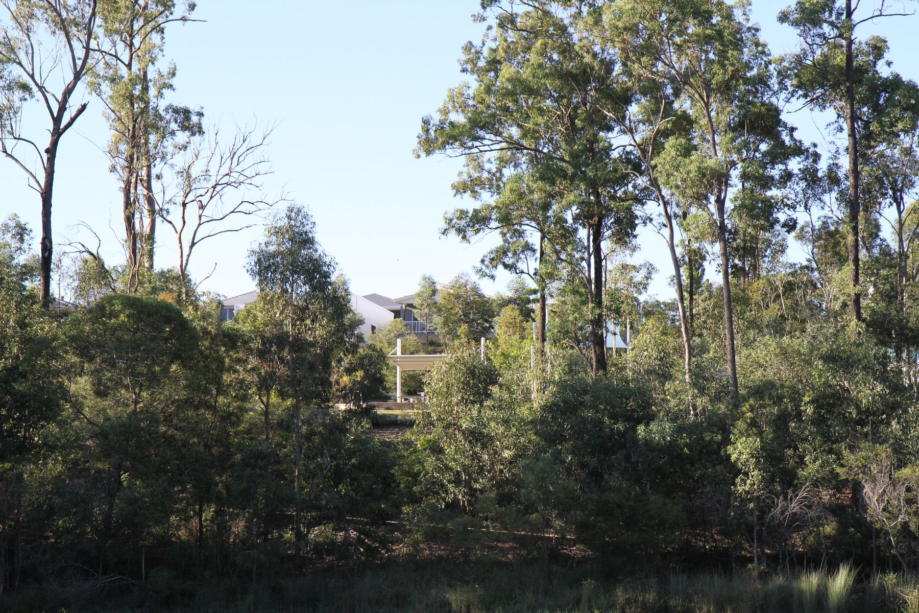 36 Daydream Crescent, Springfield Lakes, QLD 4300