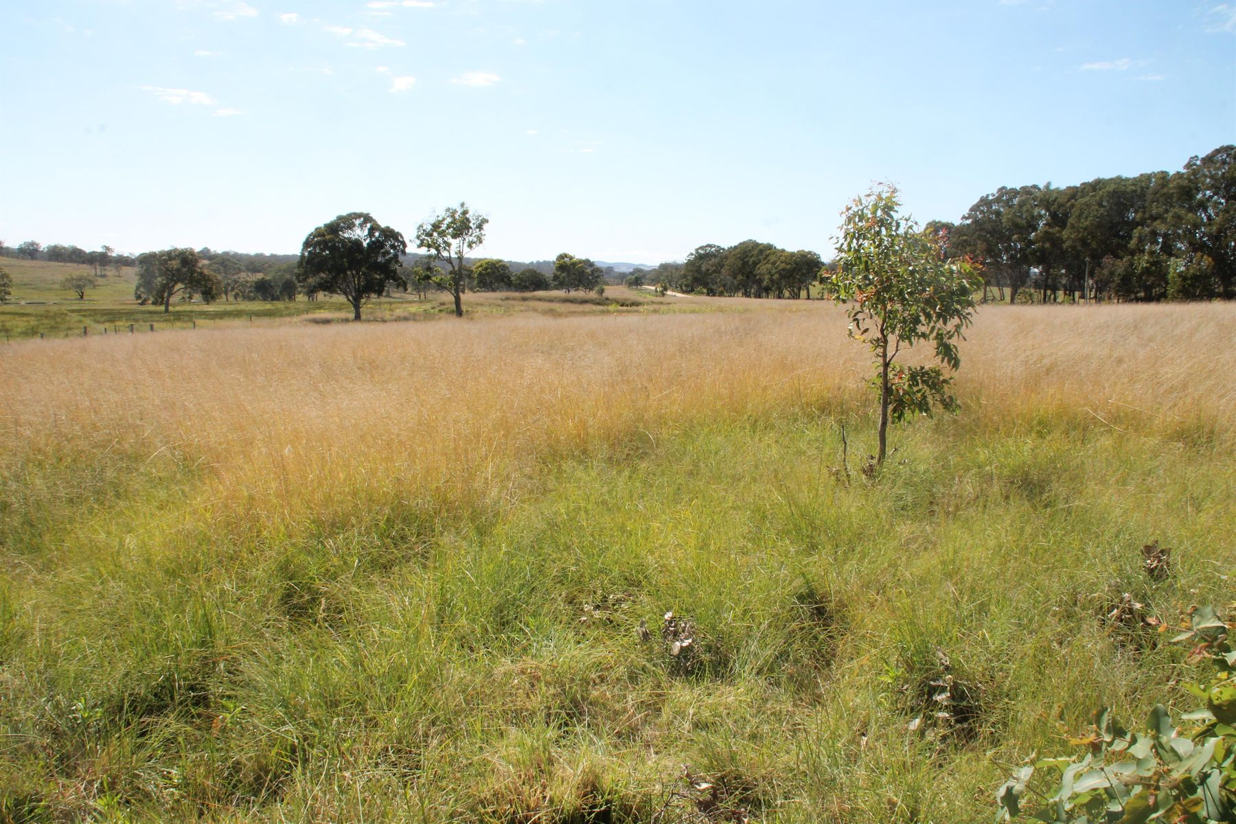 Lots 1 & 2  Wylie Creek Road, Maryland, QLD 4377