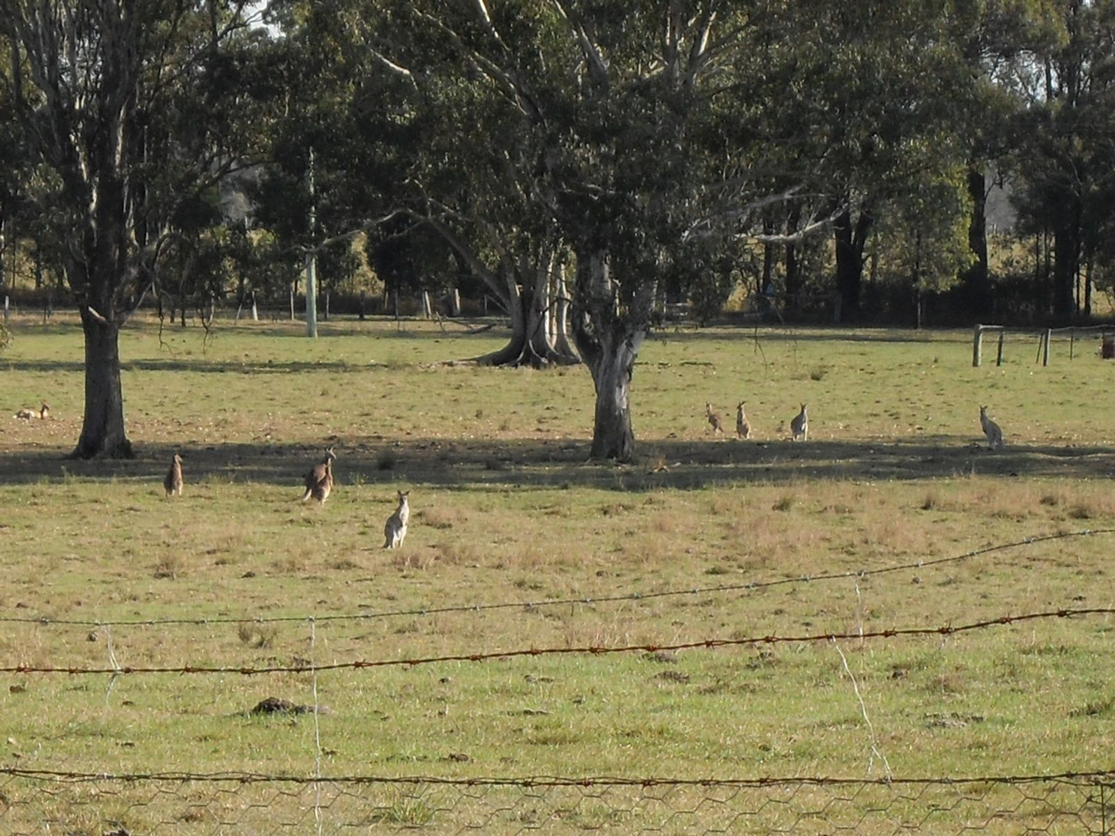 160 Crawfords Road, Casino, NSW 2470