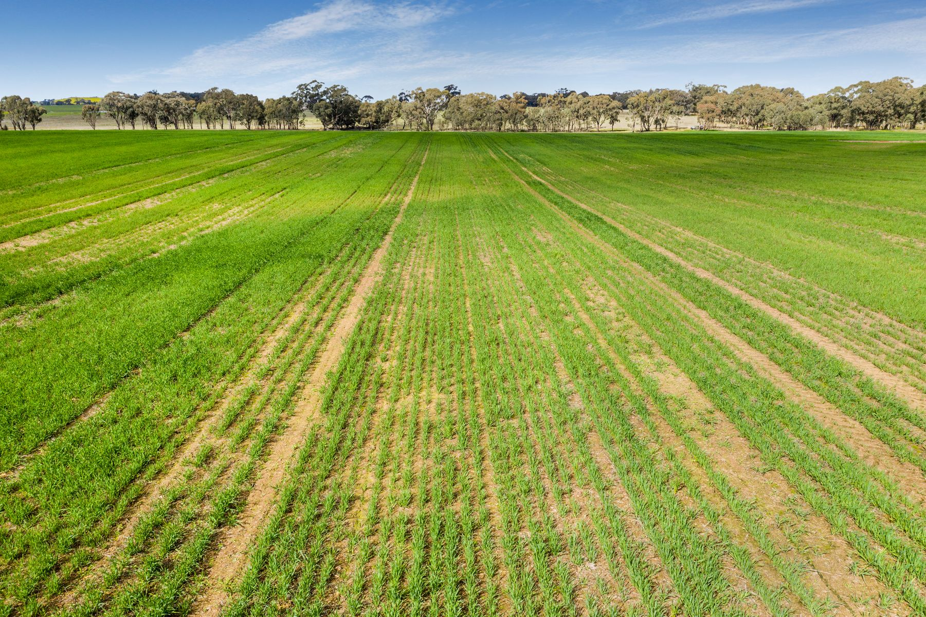Cnr Two Chain Road & Toedteberg Road, Runnymede, VIC 3558