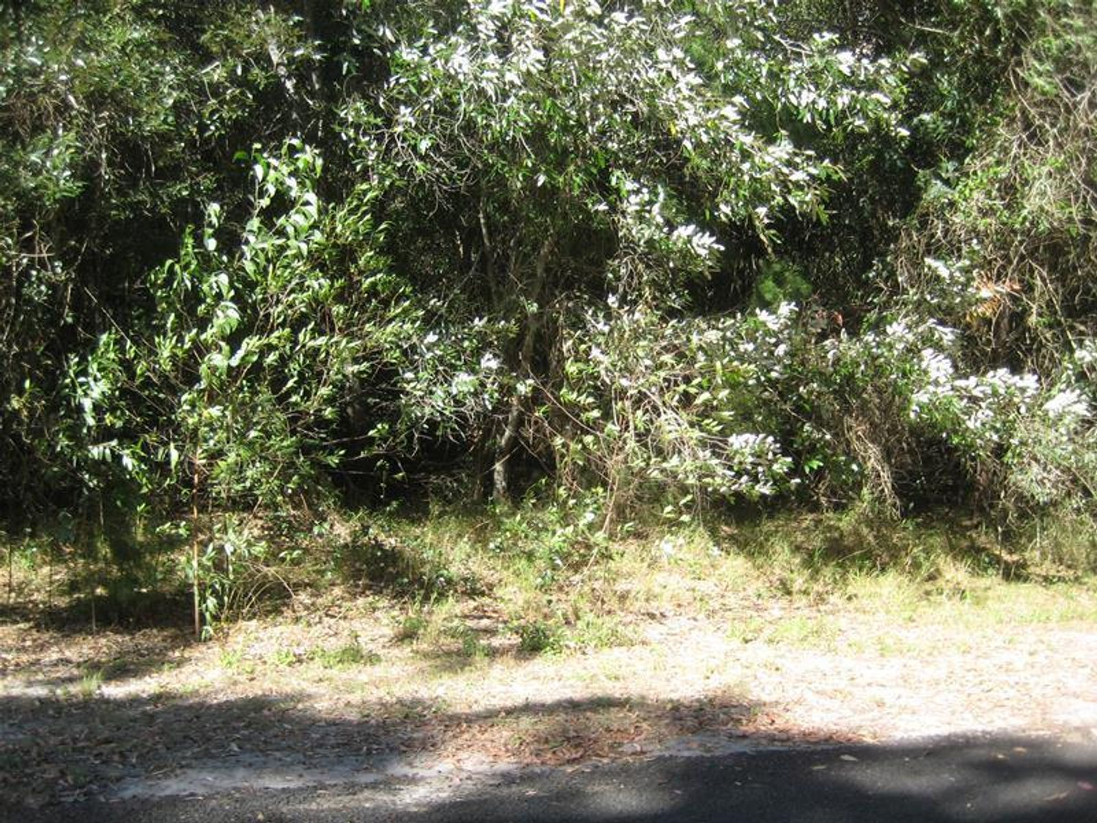 139 Davenport Drive, Coonarr, QLD 4670