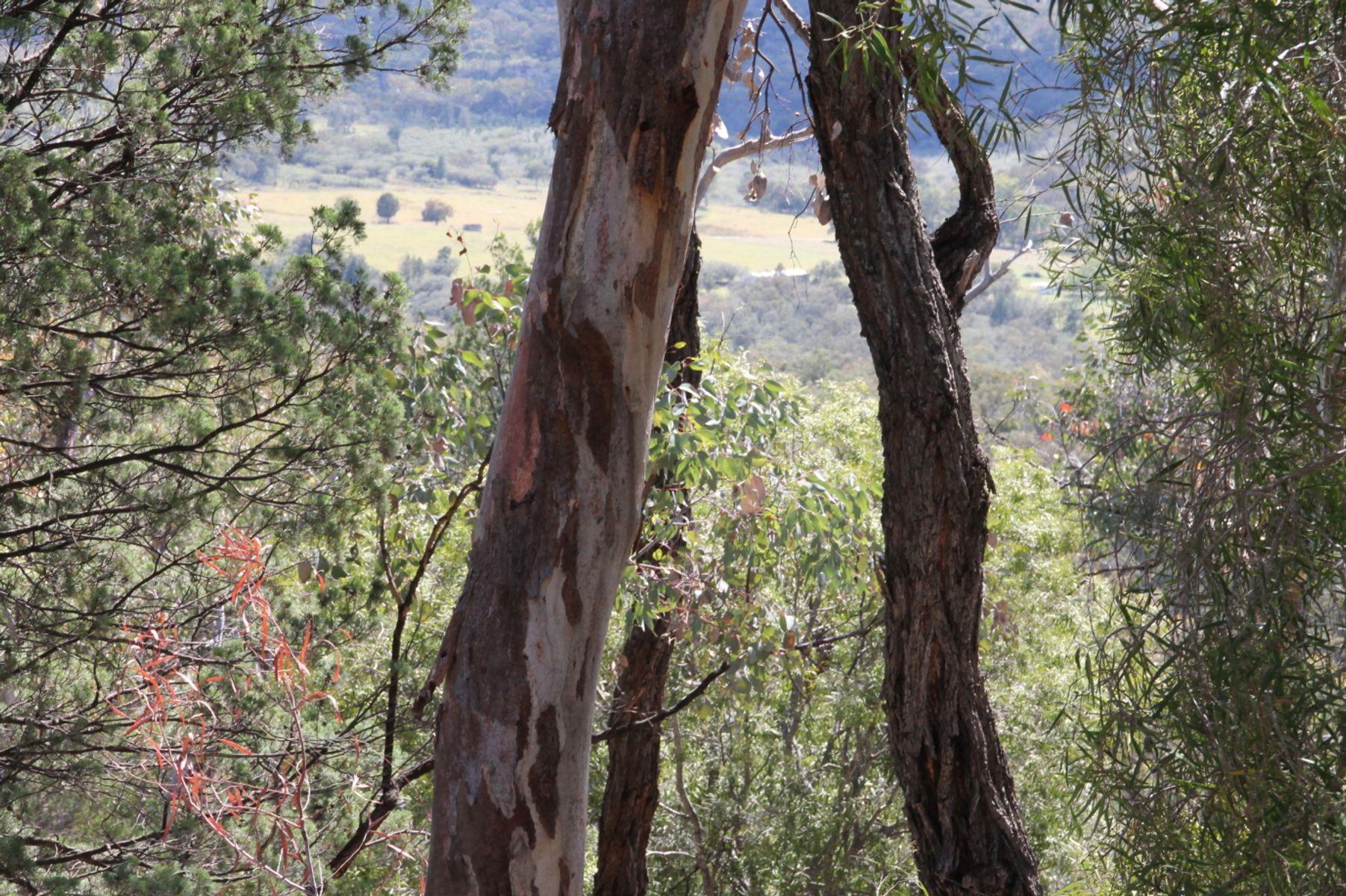 Lot 135 Back Creek Road, Tenterfield, NSW 2372