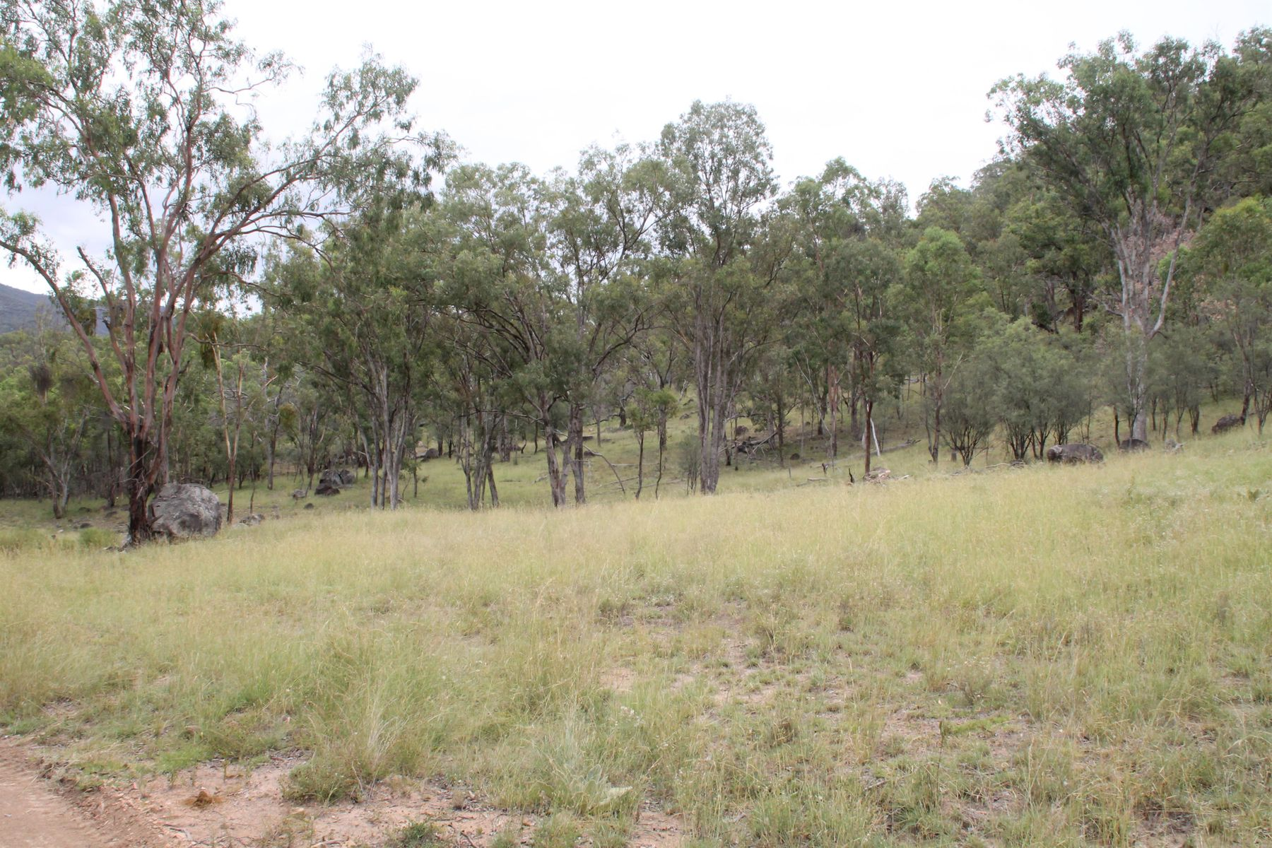 887 Bluff River Road, Tenterfield, NSW 2372