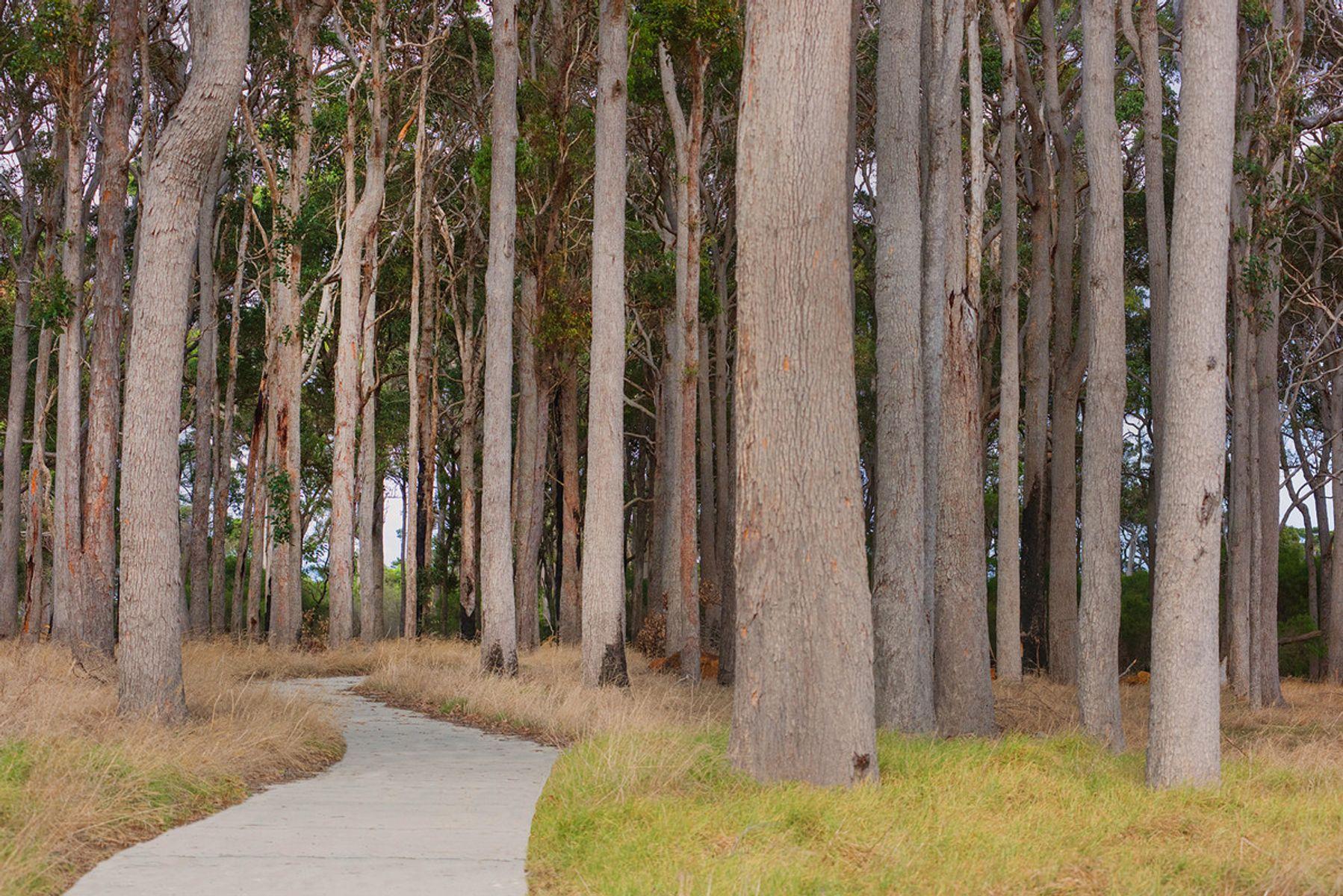 1 Lumber Crescent, Karridale, WA 6288