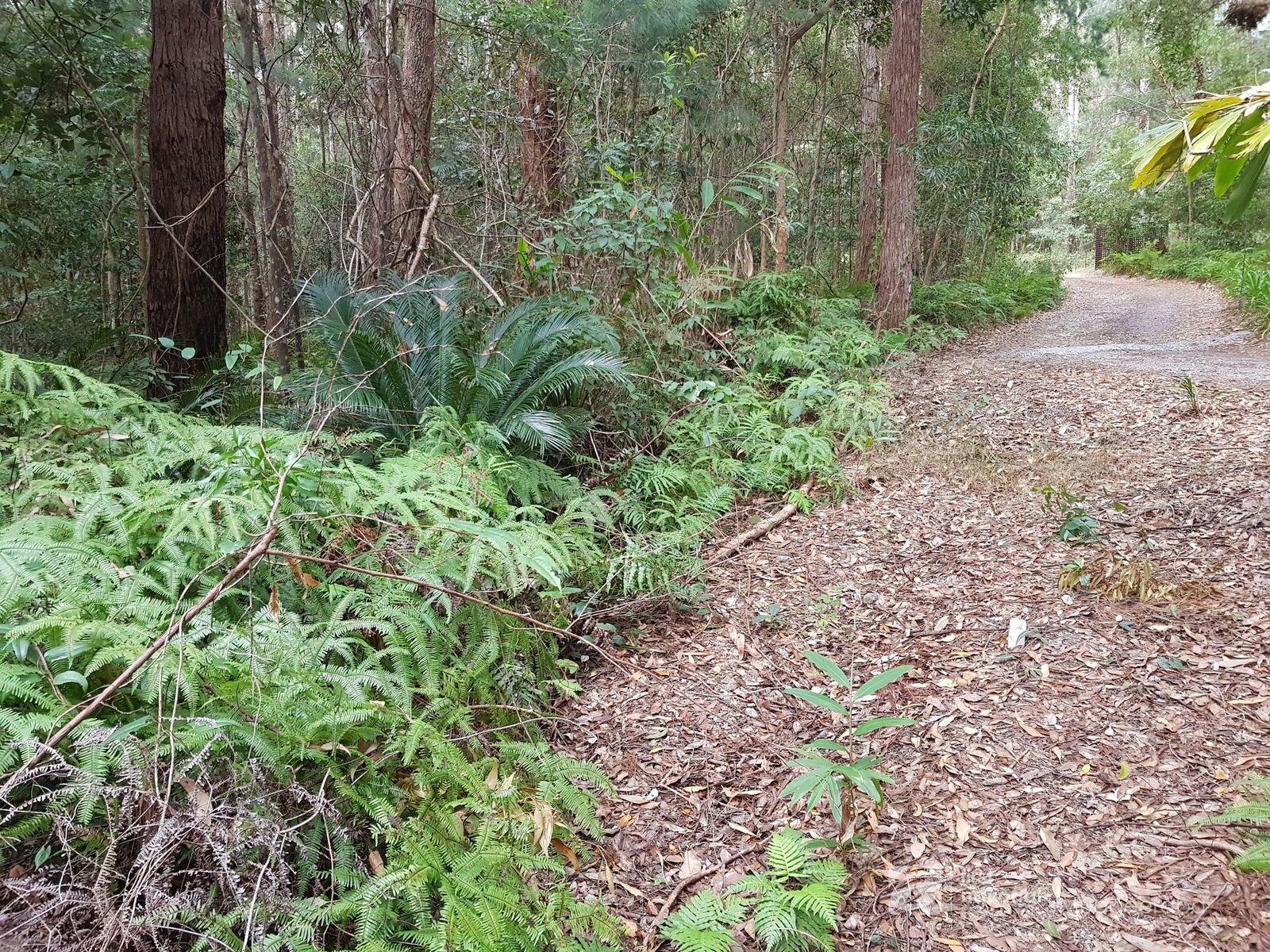 1937 Springbrook Road, Springbrook, QLD 4213