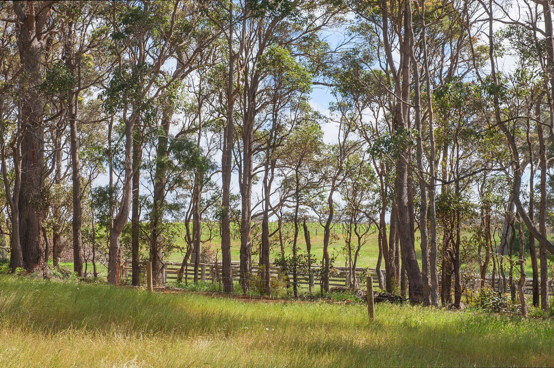 1035 Bussell Highway, Witchcliffe, WA 6286