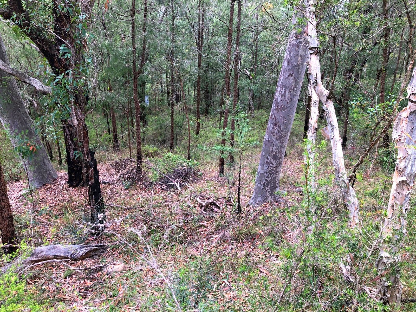 Lot 815 Tenterfield Road, North Arm Cove, NSW 2324