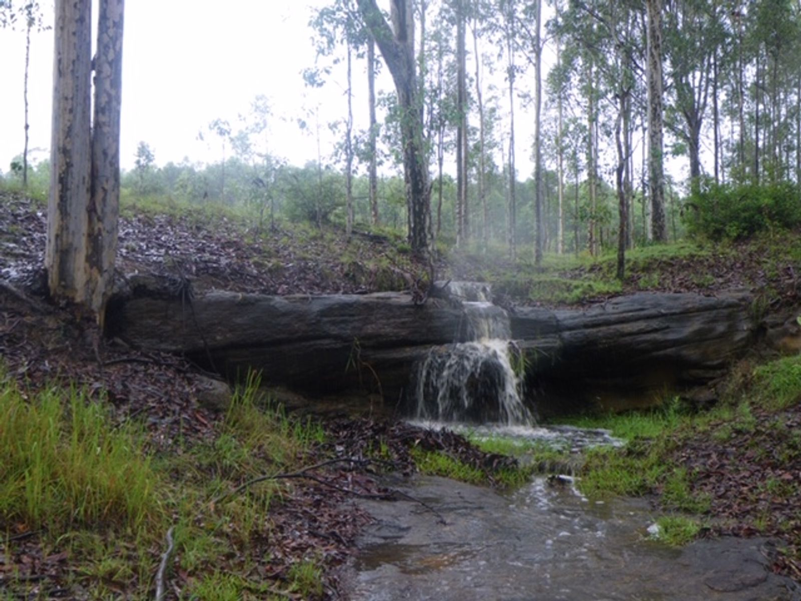 Lot 55 Bruxner Highway, Tabulam, NSW 2469