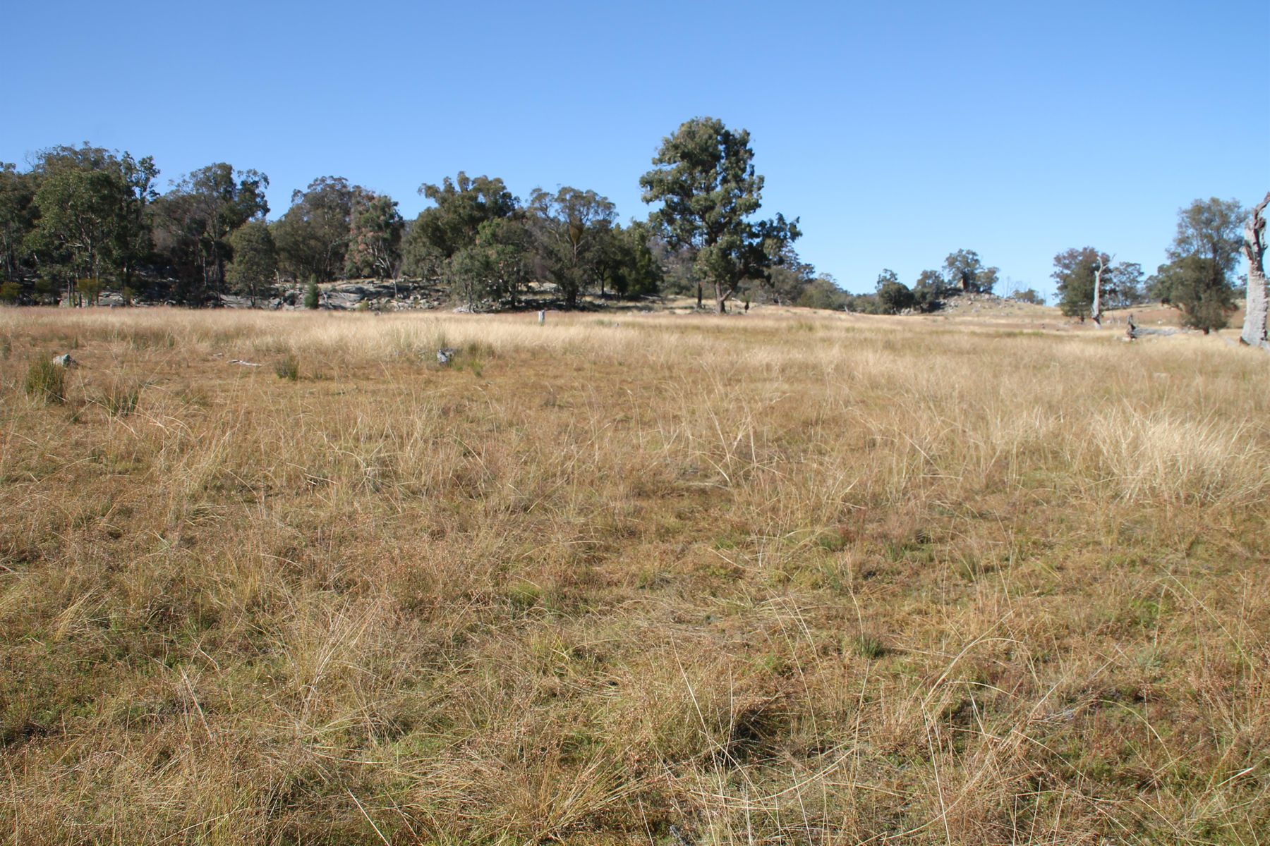 Lot 47 Gunyah Road, Tenterfield, NSW 2372