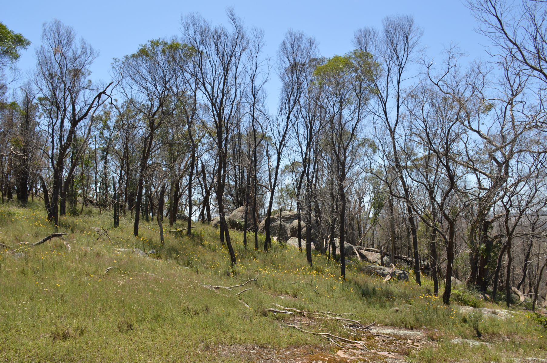 842 Ridge Road, Mudgee, NSW 2850