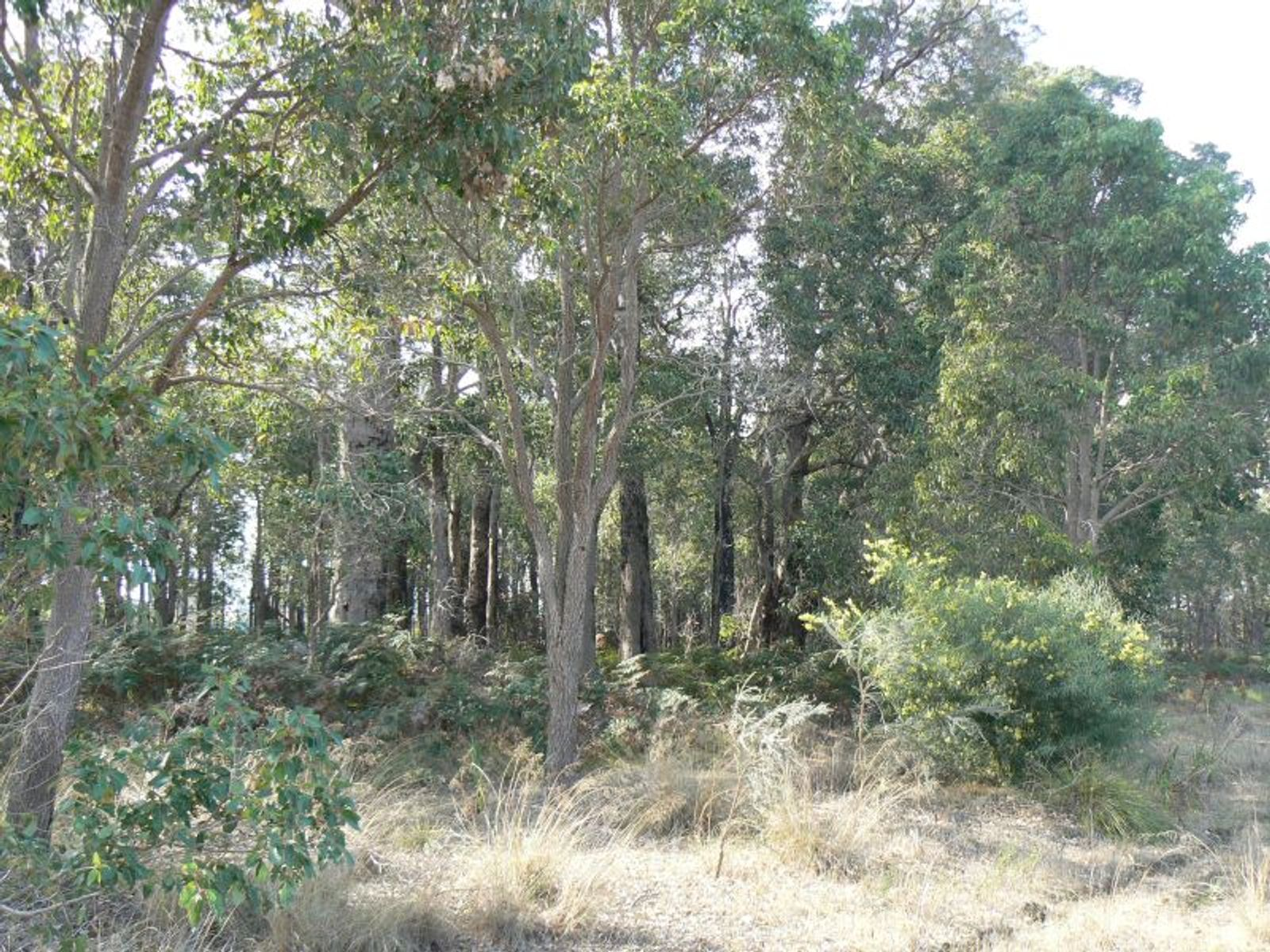 Lot 200 South Western Hwy, Donnybrook, WA 6239