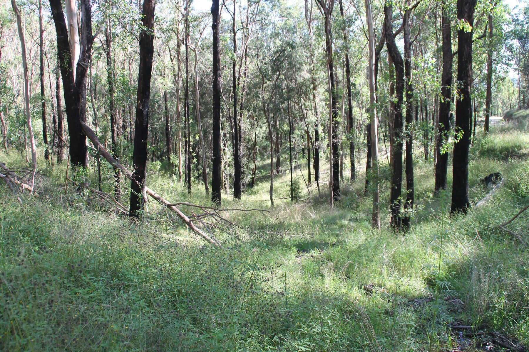Lot 55 Billirimba Road, Tenterfield, NSW 2372
