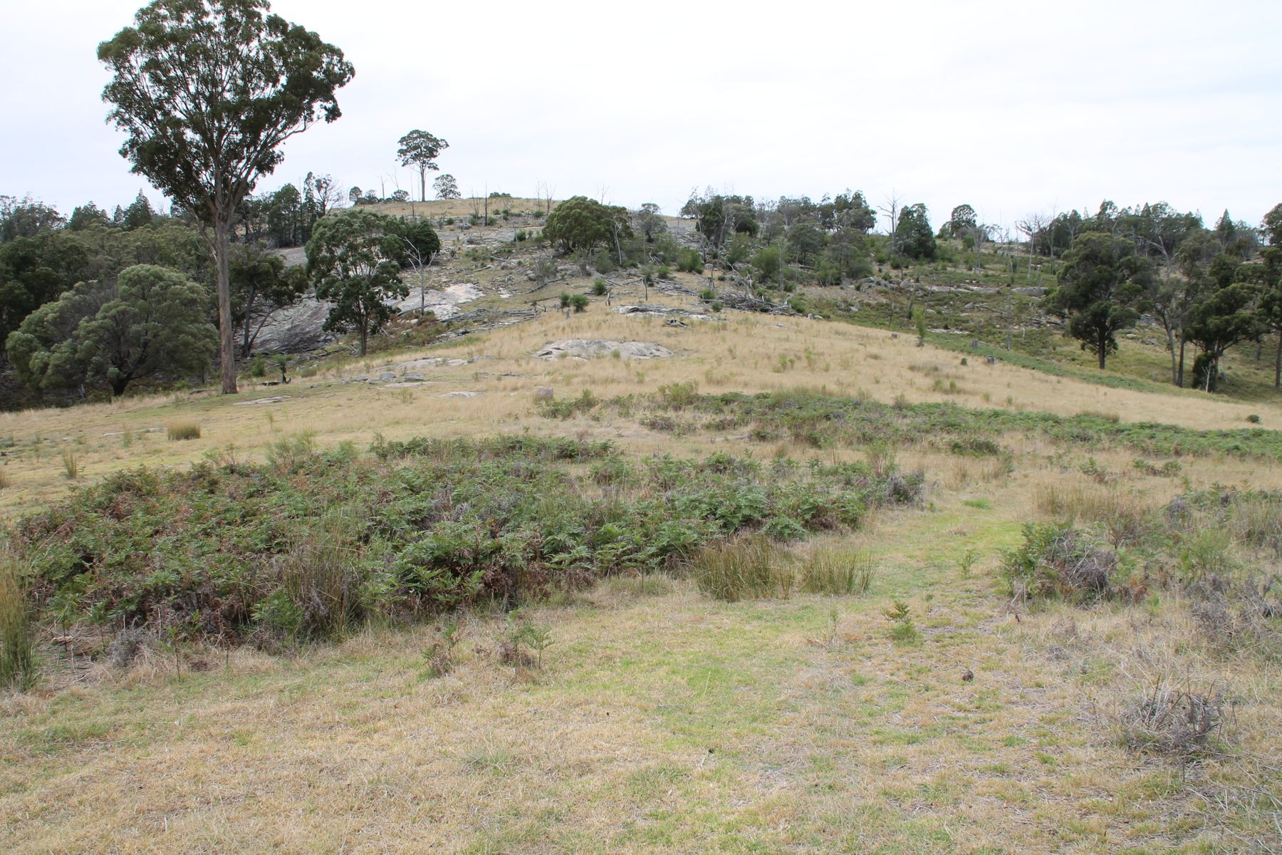 Lot 264 Gunyah Road, Tenterfield, NSW 2372