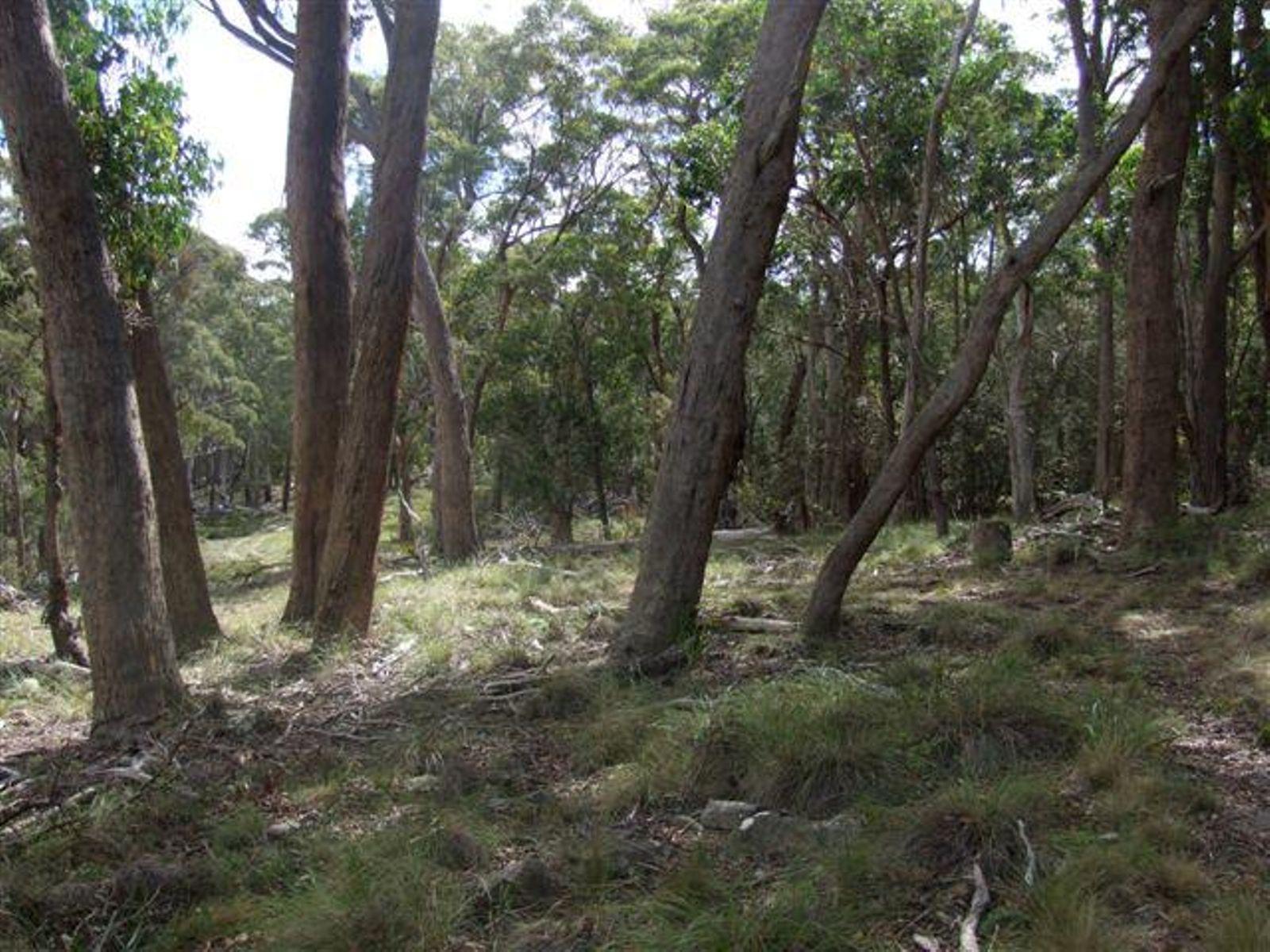 1261E Ten Mile Road, Deepwater, NSW 2371
