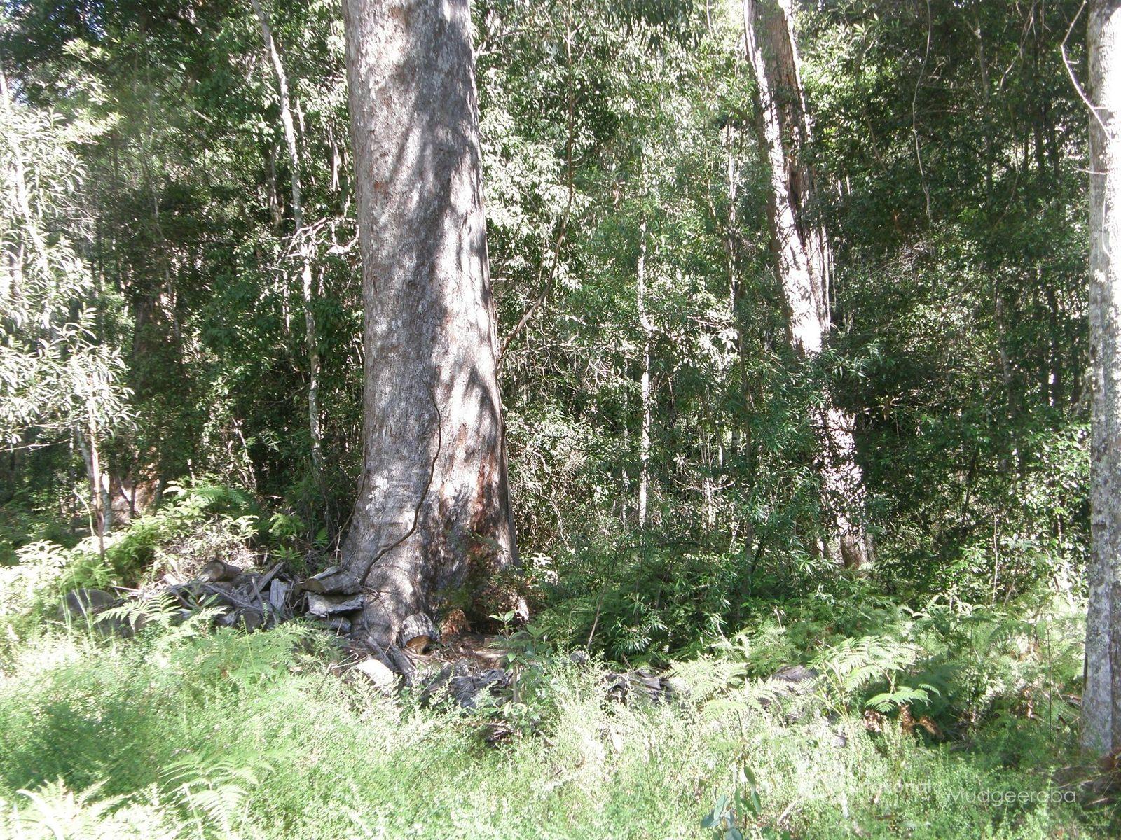 19 & 21 Banksia Road, Springbrook, QLD 4213