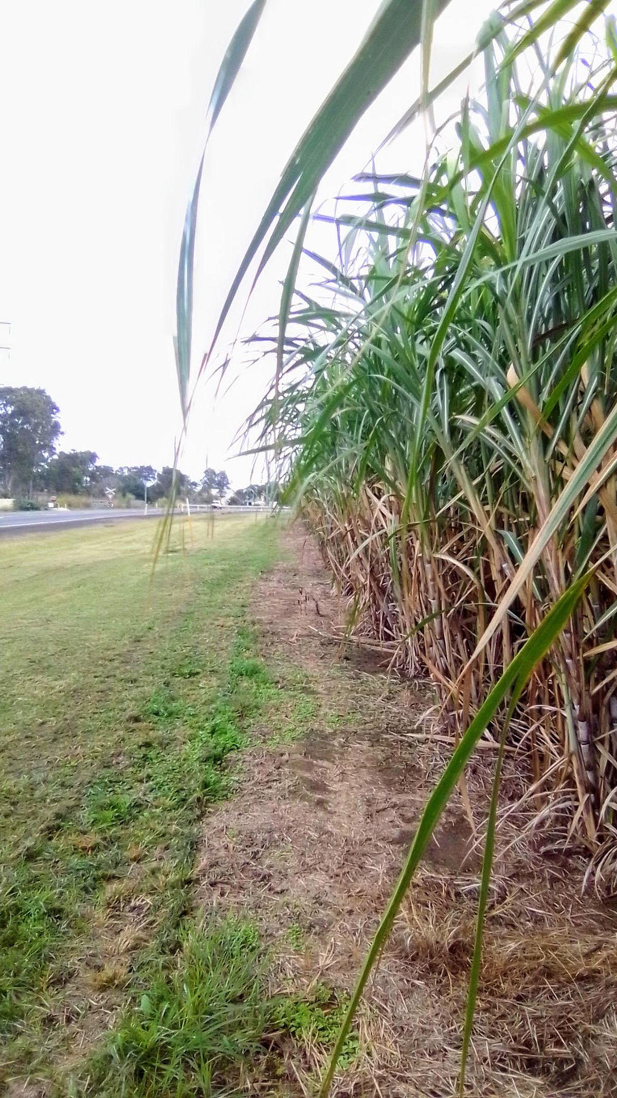 399 Lindemans Road, Moore Park Beach, QLD 4670