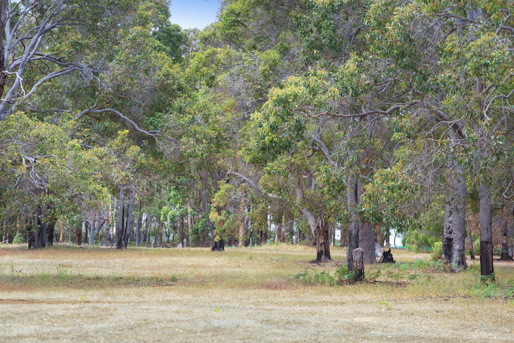 Lot 420/96 Ironstone Place, Margaret River, WA 6285