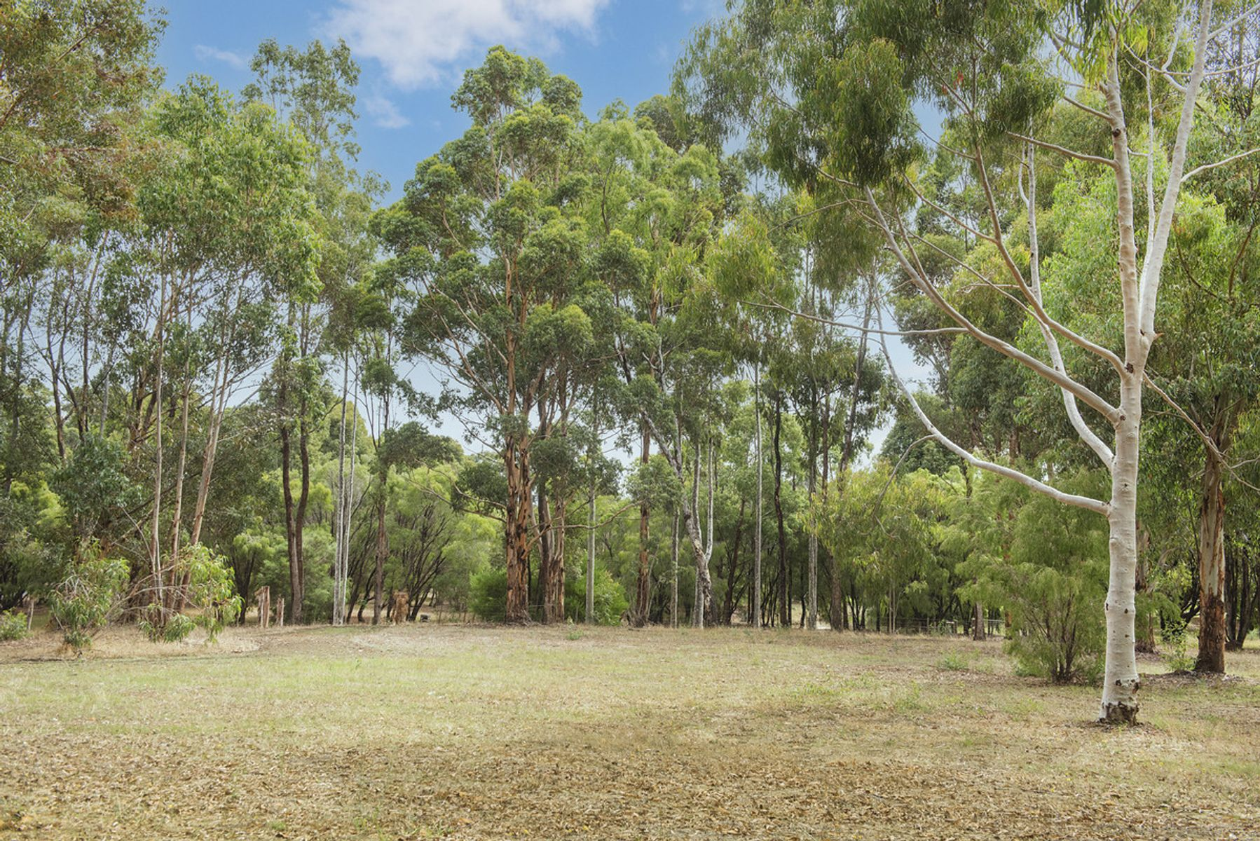 Lot Proposed Lot 221/19 Brumby Place, Margaret River, WA 6285