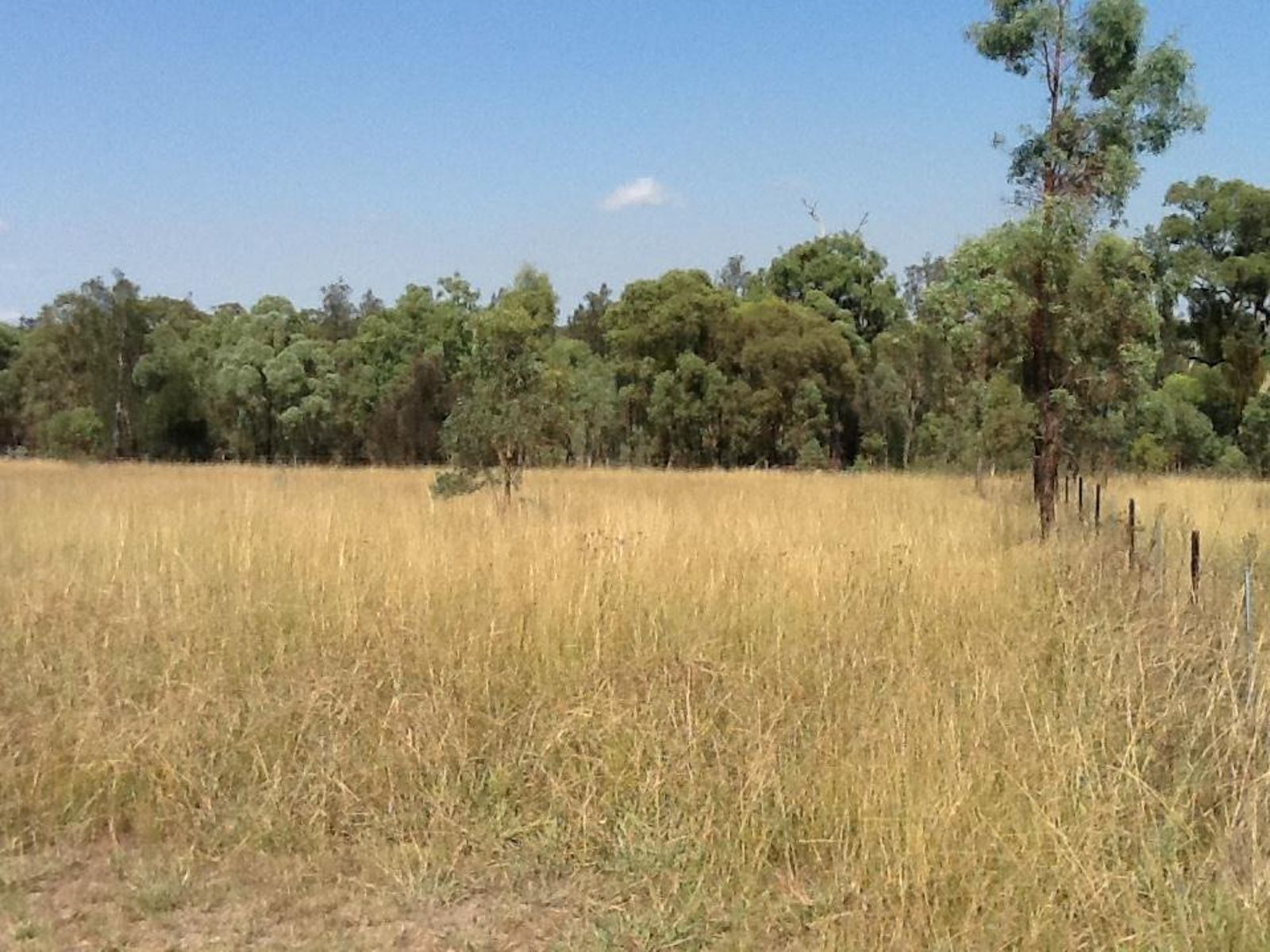 Lot 503 Stockyard Parade, Muswellbrook, NSW 2333