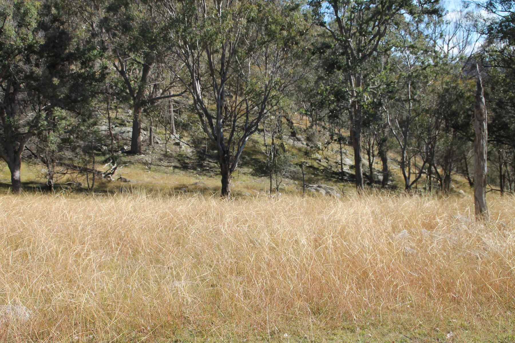 Lot 24 Bluff Creek Road, Tenterfield, NSW 2372