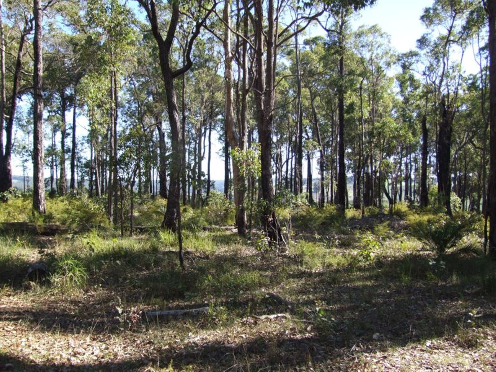 Lot 11 Russell Road, Balingup, WA 6253