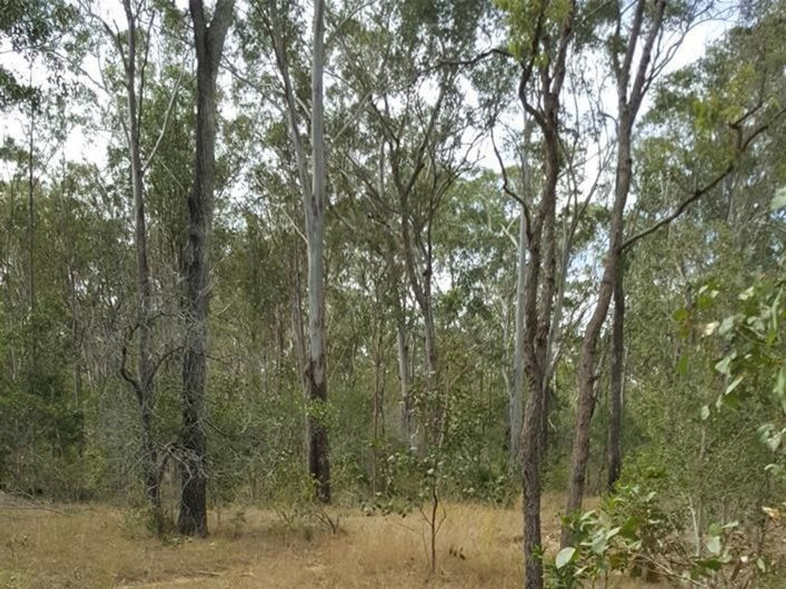 73 Baumanns Road, Avondale, QLD 4670