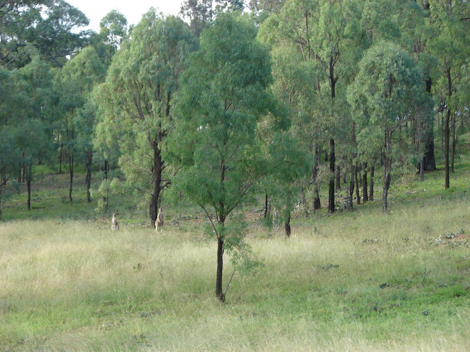 Lot 102 Skellatar Stock Route, Muswellbrook, NSW 2333