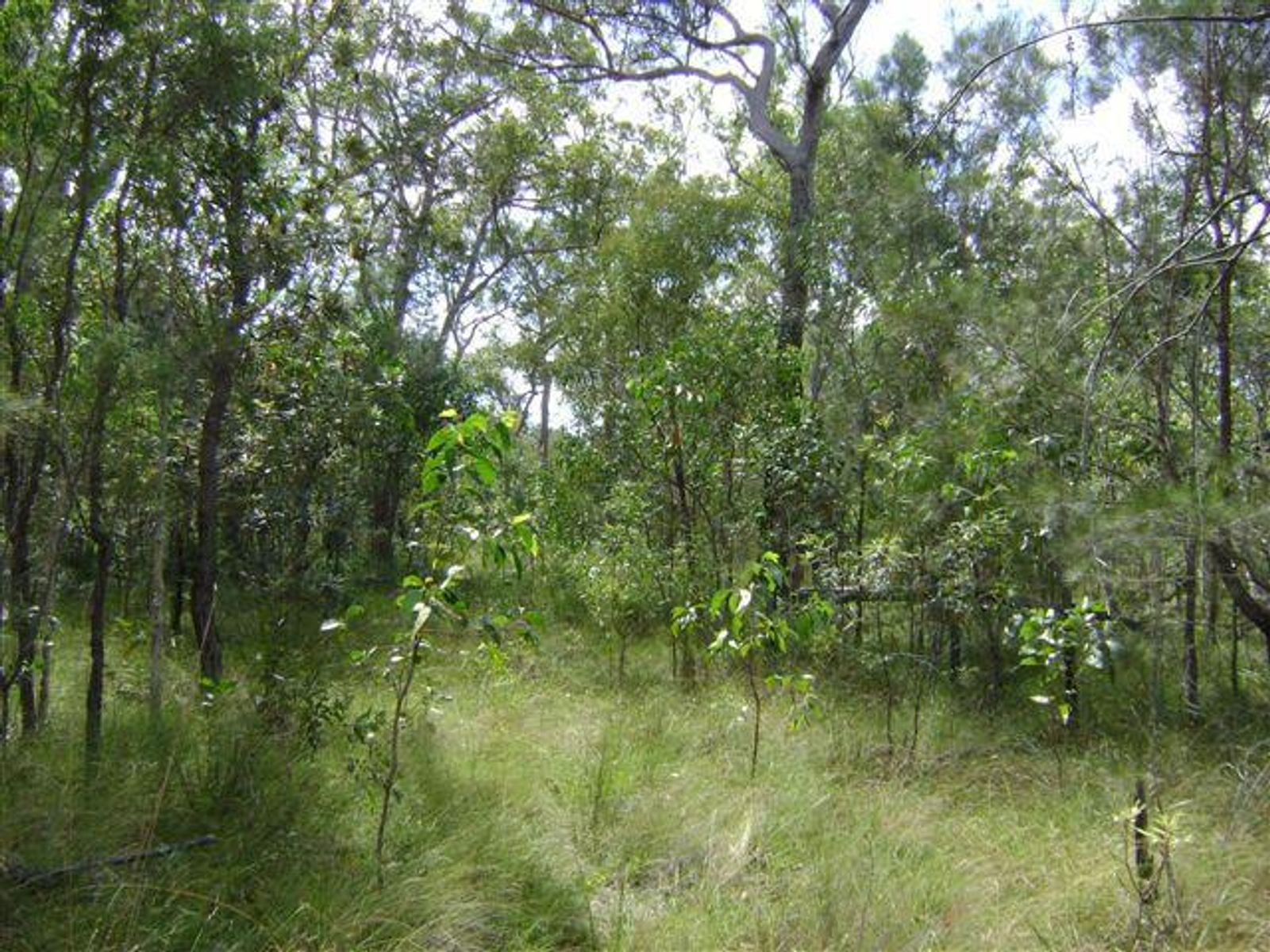 590 Pacific Drive, Deepwater, QLD 4674