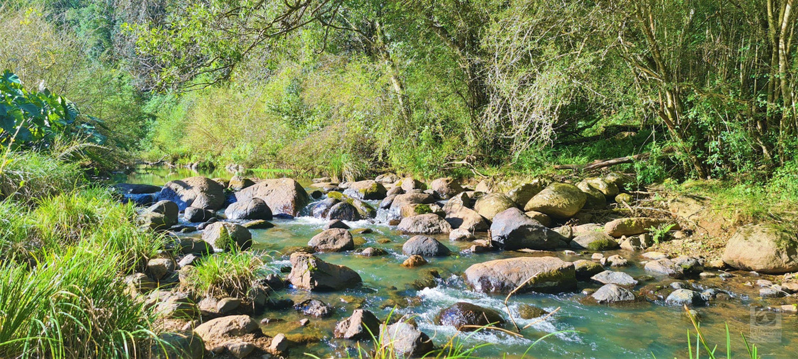 1242 Tuntable Creek Road, Nimbin, NSW 2480