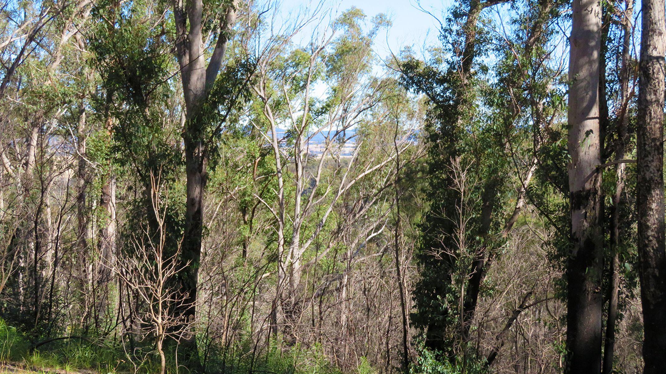 Lot 3 Wellington Lookout Road, Tenterfield, NSW 2372
