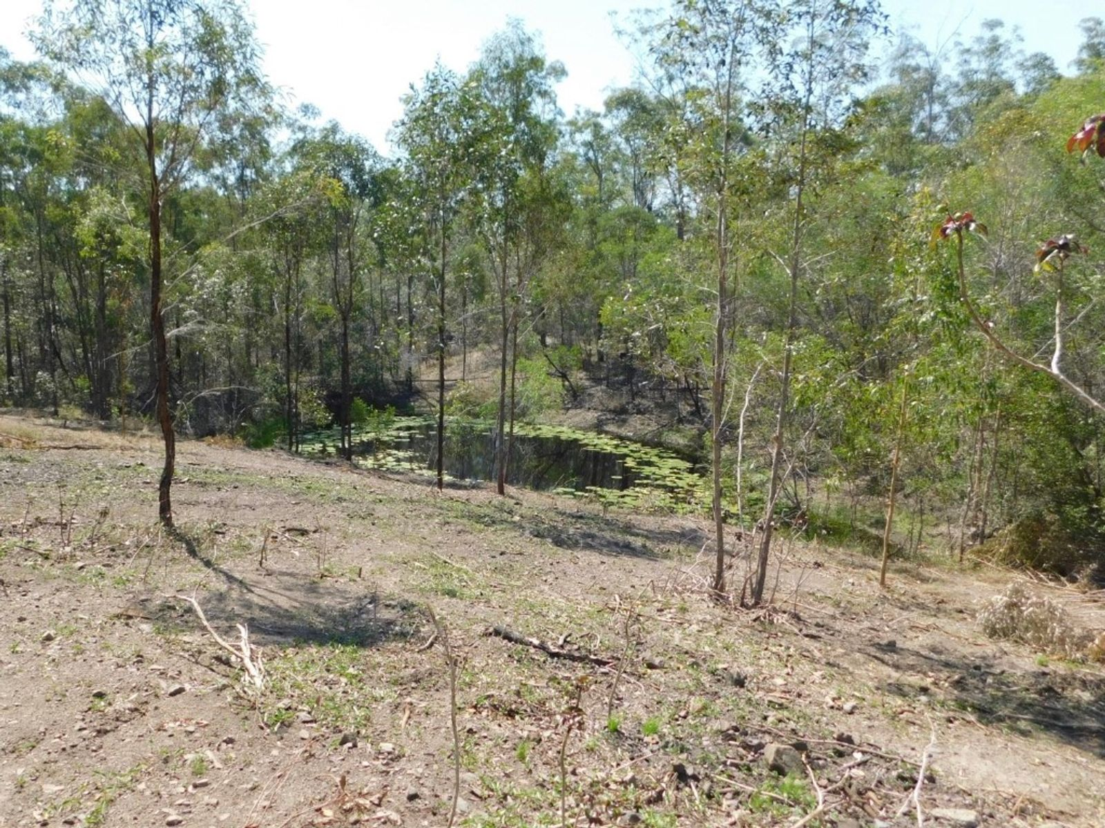 290 Mineral Road, Rosedale, QLD 4674