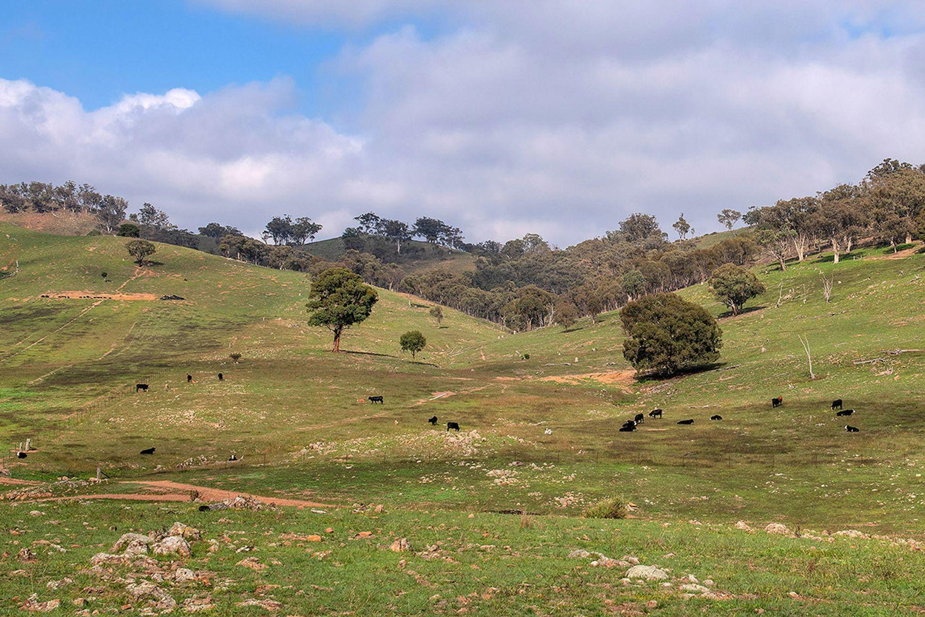 1585 Crudine Road, Mudgee, NSW 2850