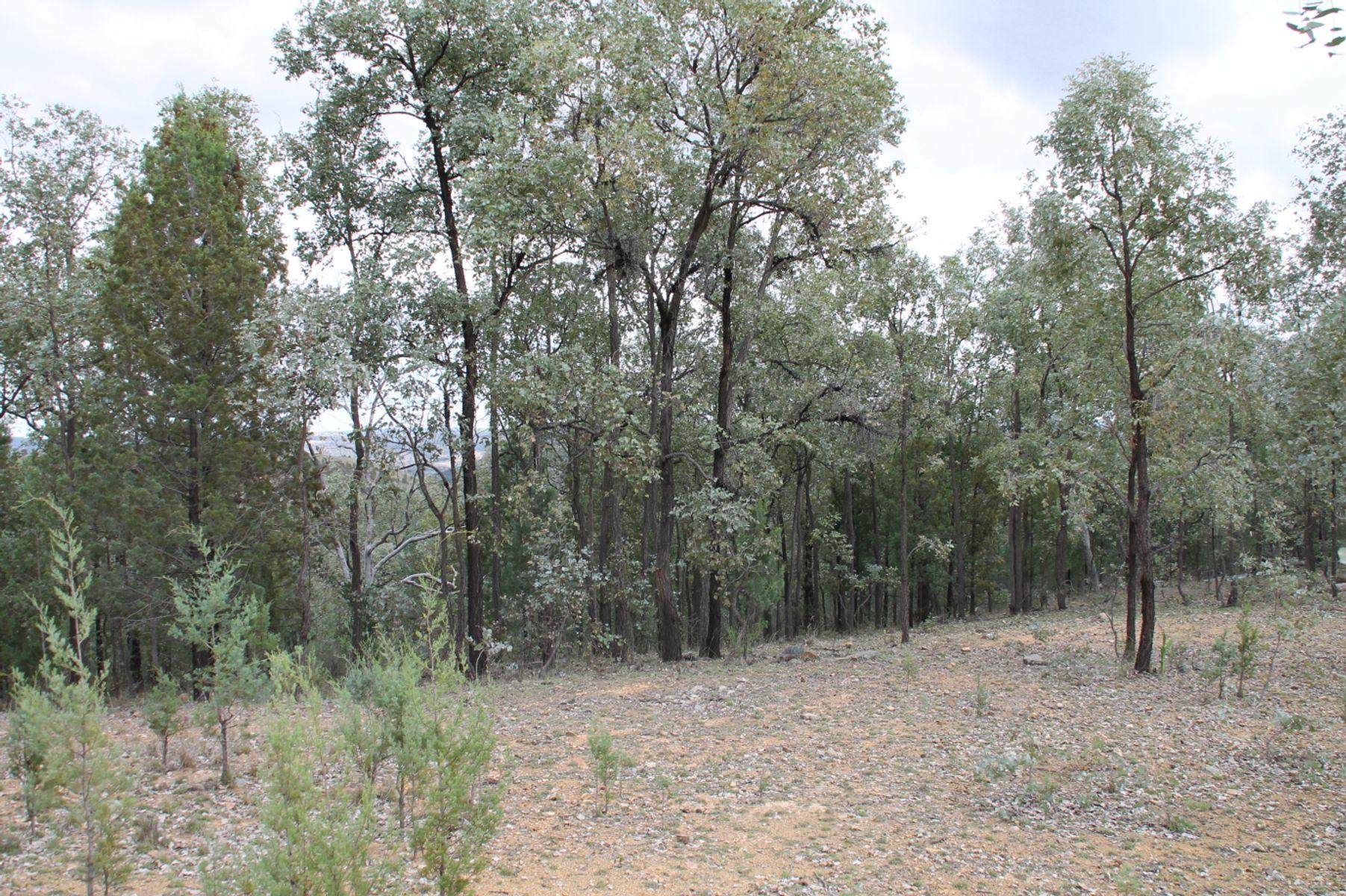 Lot 19 Mountain Creek Road, Tenterfield, NSW 2372