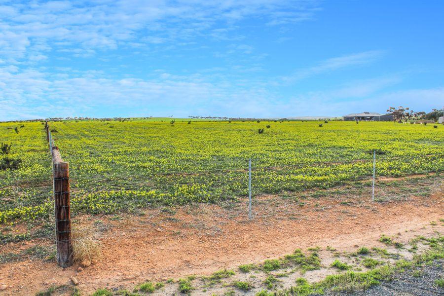 38 Barley Drive, Mannum, SA 5238