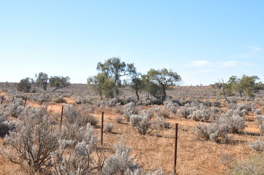 Lot /364 Ring Road, Morgan, SA 5320