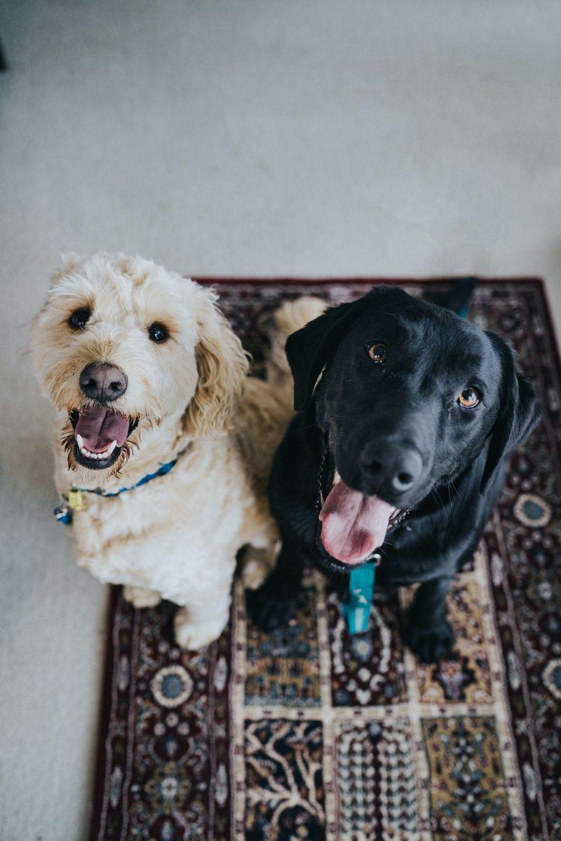 Pets in Rentals