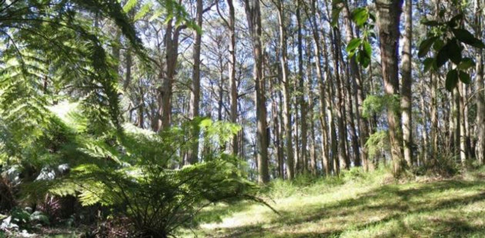 Ferny Creek Bushland
