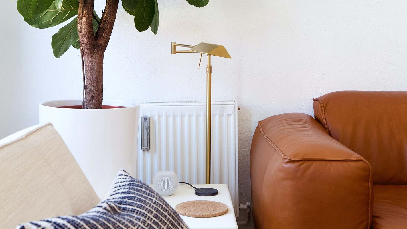 Leather couch, lamp and house plant