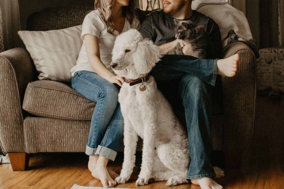 Pet Bonds
