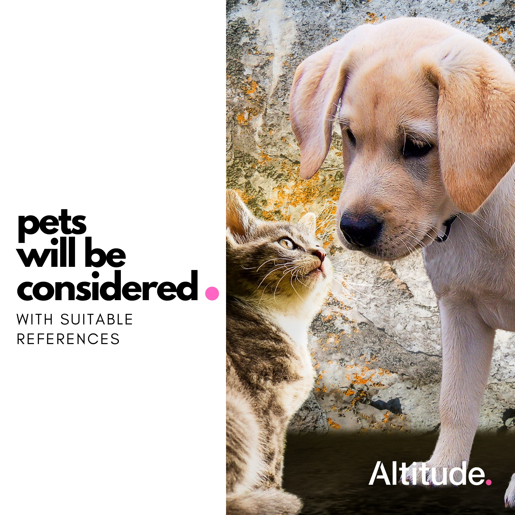 Leasing Campaign   Pets considered