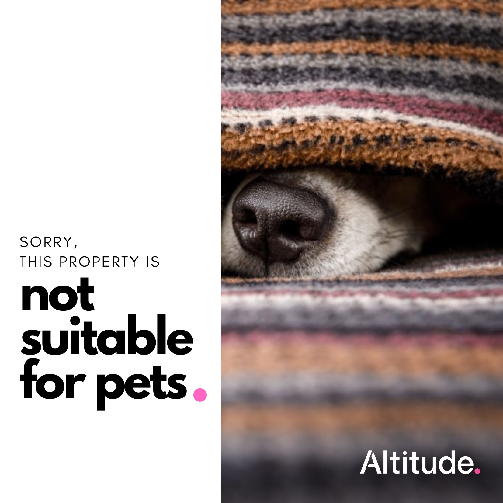 Leasing Campaign   Not Suitable for Pets