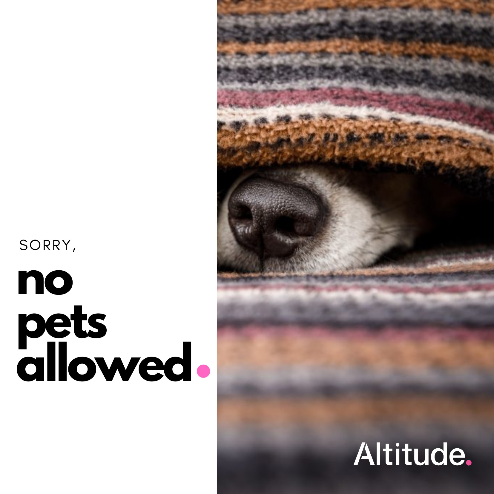 Leasing Campaign   No Pets Allowed